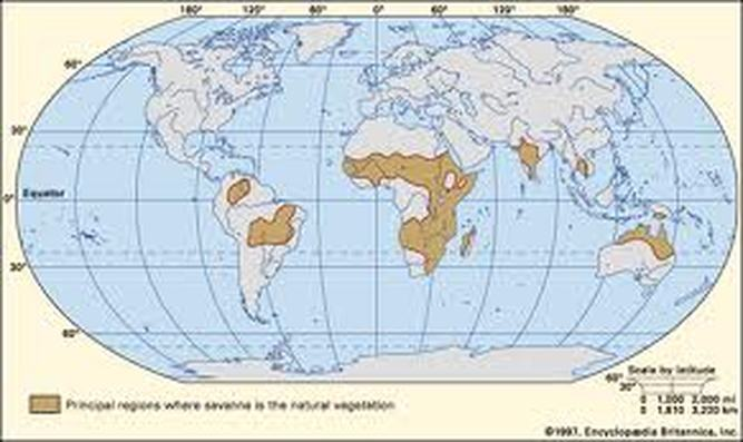 Geographical Locations in which Savannas are found: